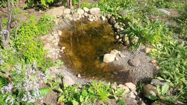Pond in September. Plants are mostly flowerless now except for asters. A northern leopard frog can be seen swimming in the pond
